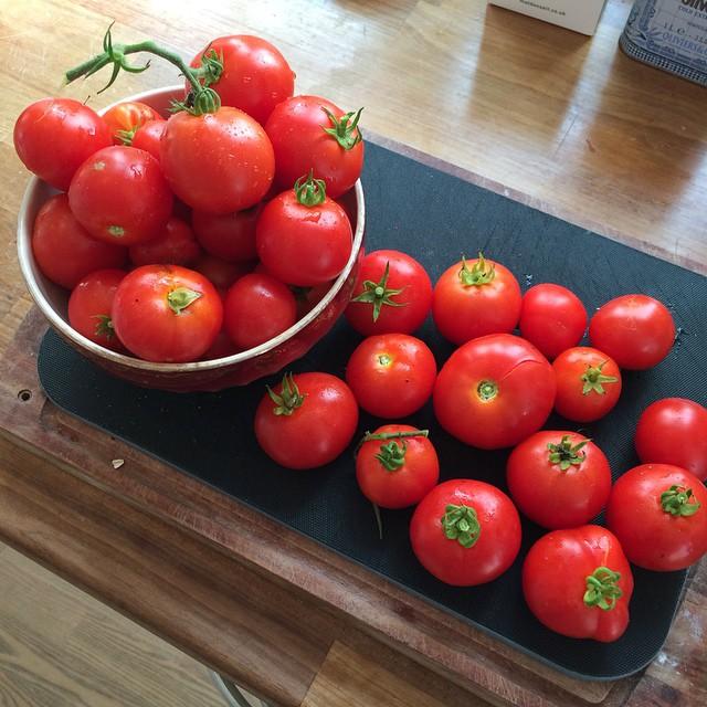 Skulle bare hente et par tomater til frokosten ... #haveliv #tomatamok