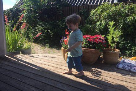 lillebror