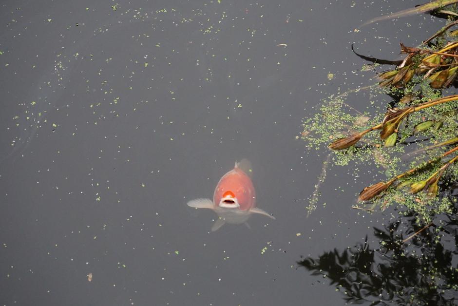 fiske-fisk